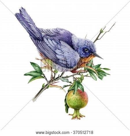 Watercolor Illustration Of An Eastern Bluebird On A Pomegranate Branch. Blue Bird Sitting On A Tree