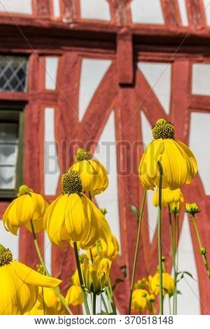 Yellow Flowers In Front Of A Half Timbered House In Limburg An Der Lahn, Germany