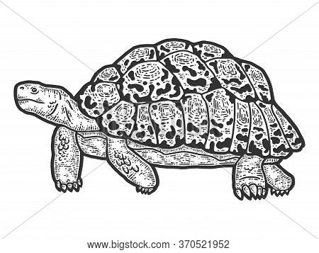 Animal Leopard Tortoise. Sketch Scratch Board Imitation. Black And White.