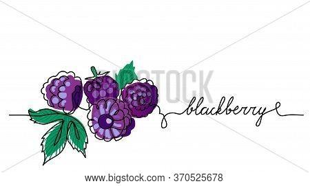 Blackberry, Bramble, Dewberry, Vector Color Illustration, Background. Black Berry Sketch For Label D