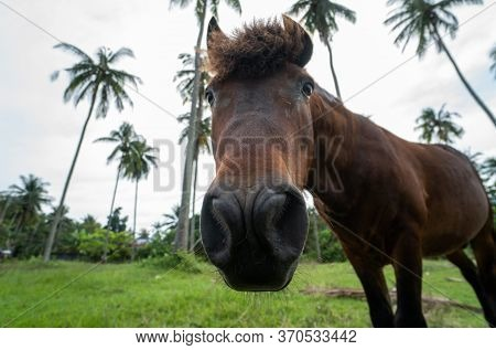Beautiful Brown Inquisitive Horse Is Stare Directly At The Camera With A Palm Trees On Background. H