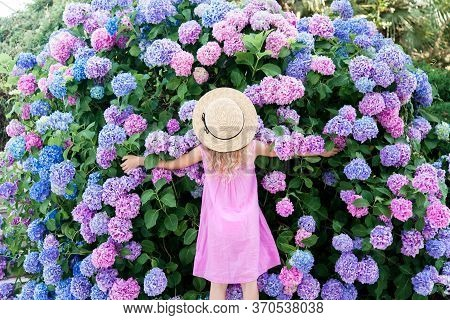 Little Girl Hugging Big Hydrangea Bushes In Garden. Pink, Blue, Lilac Flowers Blooming In Spring And