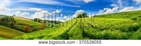 Panoramic Rural Landscape With Idyllic Vast Green Barley Fields On Hills And Trails As Lines Leading