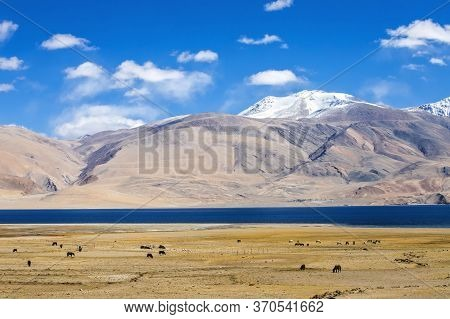 Tso Moriri Lake On Clear Sunny Day With Mountain Background In Ladakh Region State Of Jammu And Kash