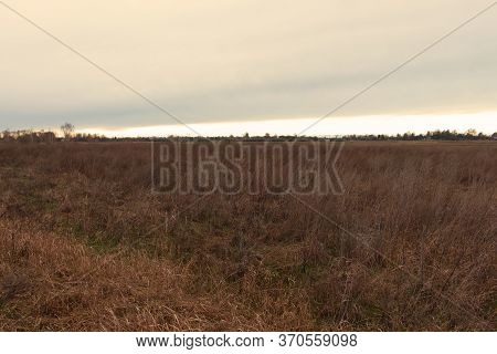 Wilted Steppe Grasses. Cloudy Steppe Landscape In The Evening.