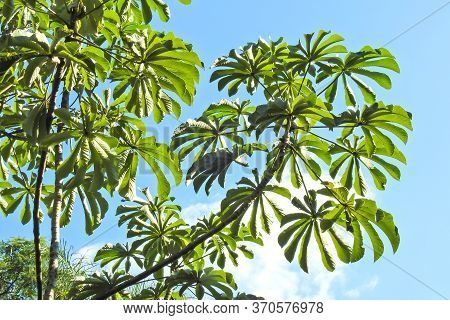 Tropical Leaves. Foliage In A Sunny Day. Concept Of Summer, Jungle, Rainforest. Suitable For Backgro