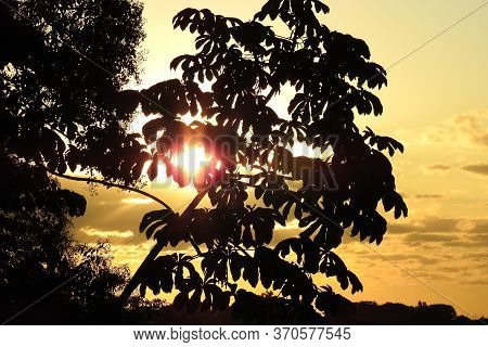 Tropical Leaves Silhouette At Sunset. Background, Banner For Summer Vacation. Concept Of Rainforest,