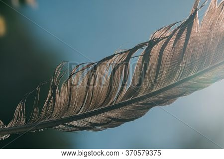 A beautiful black feather up close