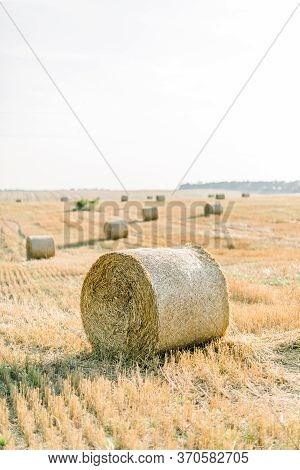 Golden Round Hay Bales In The Countryside. Process Of Harvesting Of Agricultural Fields. Amazing Vie