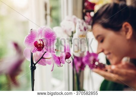 Woman Smelling Orchids On Window Sill. Girl Gardener Taking Care Of Home Plants And Flowers.