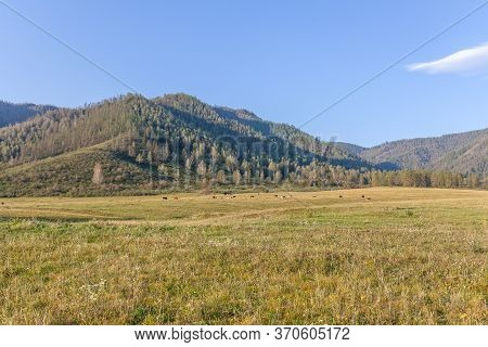 View Of A Herd Of Horses Grazing Peacefully. Folded Hills Under The Blue Sky. Shining Landscape. Abs