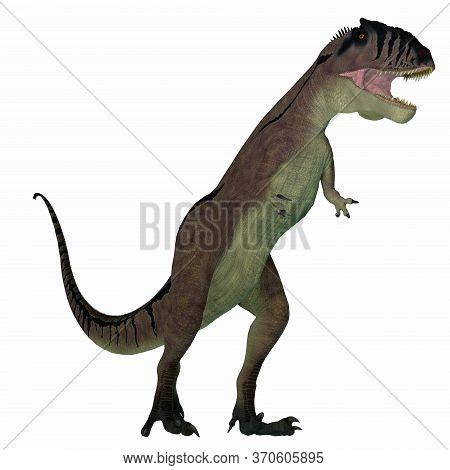 Carcharodontosaurus Dinosaur On White 3d Illustration - Carcharodontosaurus Was A Predatory Theropod