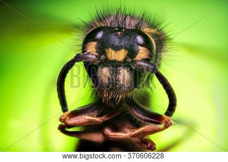 Extreme Sharp And Detailed Study Of Wasp Head On Green Background Taken With Microscope Objective St
