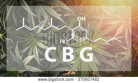 Full Frame Overhead Shot Of Medical Cannabis With The Cbg Cannabigerol Letters And Chemical Structur