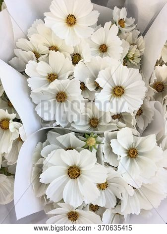 Top View On Some Bouquets Of Fresh  White Flowers. Close-up Of Beautiful  Cute Flowers. Background A