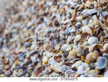 Seashells Texture, Pattern Closeup. Background Beautiful Seashells