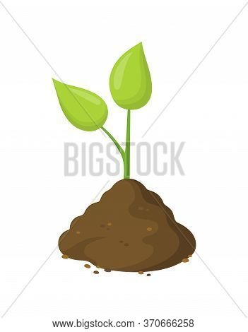 Green Sprout In Ground Isolated On White, Plant That Grows From Seed, Green Seedlings Grow Into Big
