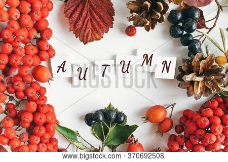 Autumn Flat Lay: Autumn Yellow, Orange And Red Leaves, Rowan Berries, Cones, The Inscription Autumn