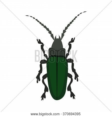 Green Longhorn Beetle . Entomology, Wildlife, Bug. Insects Concept. Can Be Used For Topics Like Natu