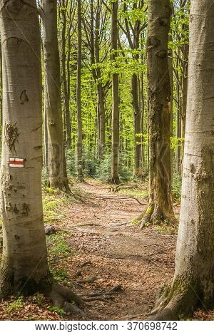 Poland. Bieszczady. The Trail To The Duszatyn Lake. Path Between Trees, Trail Marking;