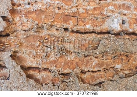 Termites Are Eating The Wood Of The House. They Destroy Houses, Wooden Parts And Destroy Wood Produc
