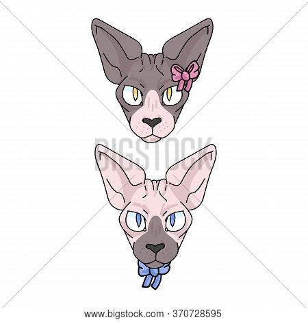 Cute Cartoon Sphynx Face Cat Boy And Girl Vector Clipart. Pedigree Exotic Kitty Breed For Cat Lovers