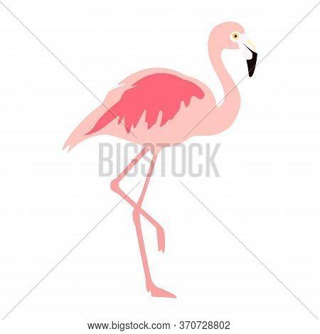 Vector Illustration Pink Flamingo. Exotic Bird. Cool Flamingo Decorative Flat Design Element. Lovely