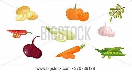 Set Vegetables. Peas Pods, Beet, Carrot, Olive, Chili, Potato , Pumpkin, Zucchini Squash. Vector Fla