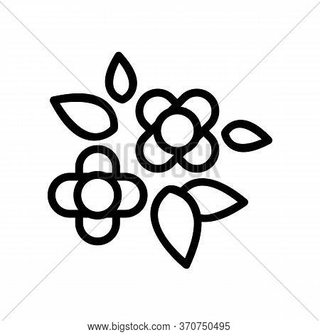 Canola Flowers Buds Icon Vector. Canola Flowers Buds Sign. Isolated Contour Symbol Illustration