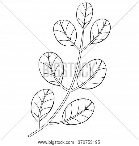 A Brunch With Leaves Image For Relaxing Activity,a Coloring Book,page For Adults And Children.black
