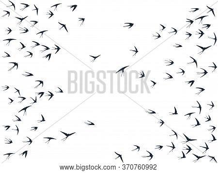 Flying Martlet Birds Silhouettes Vector Illustration. Nomadic Martlets Flock Isolated On White. Swif