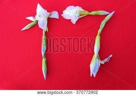Number 17 Written By Fresh Iris Flowers On A Red Background. Number Seventeen Written In Fresh Flowe