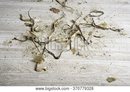 An Artfully Arranged Generic Flat Background Texture Wood Panel Layout With A Mix Of Sand And Organi