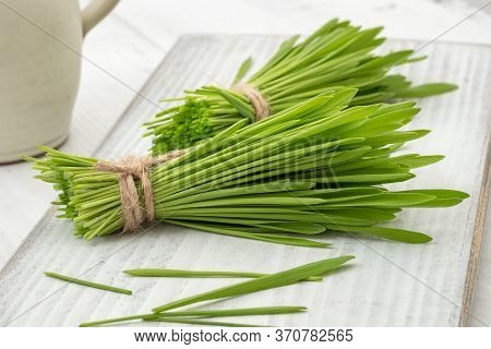 Barley Grass On A White Wooden Background