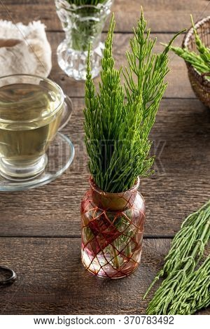 Fresh Horsetail Twigs In A Vase, With Herbal Tea In The Background