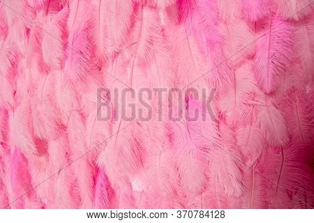 Bright Background Of Fuchsia Feathers. Pink Feathers