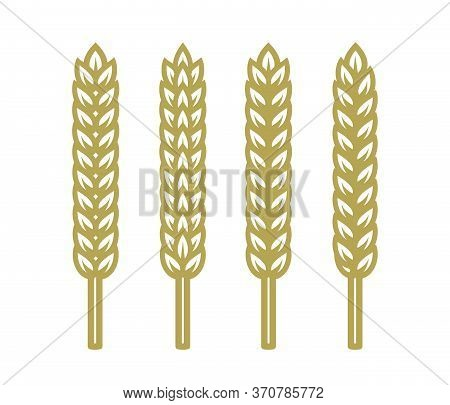 Set Of Ears Of Wheat, Barley Or Rye. Vector Illustration Isolated On White Background.