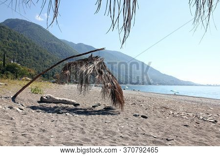 Sun Canopy Umbrella Of Dry Palm Leaves. On The Beach In Gagra On The Black Sea In Abkhazia
