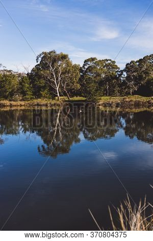 Tasmanian Landscape Of The Browns River With Eucalyptus Gum Trees Reflected On The Water
