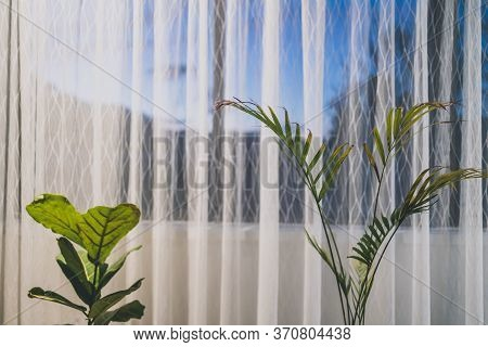 Palm Tree And Fiddle Leaf Fig Indoor Next To A Big Window With Sunset Outside
