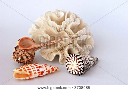 Coral And Seashells