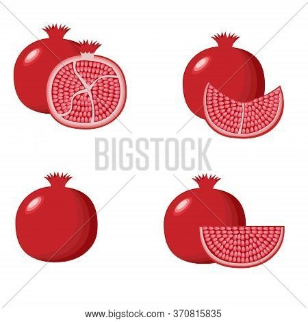 Pomegranate Hand Drawn Vector Illustration. Pomegranate Whole Fruit And Half Sliced.
