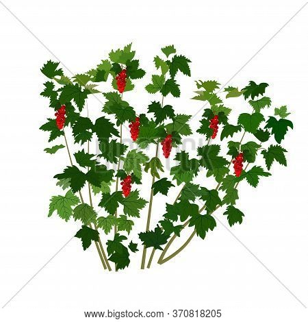 Vector Stock Illustration Of A Currant Bush. Red Ripe Berries Close-up. Shrub In The Form Of A Green
