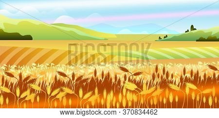 Autumn Rural Landscape With Fields Of Wheat, Hills, Sky, Clouds. Farming Summer Harvest View. Countr