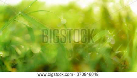 Blurred Fresh Green Grass Field With Raindrops In Early Morning. Water Drops On Green Grass Leaves I