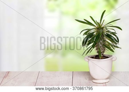 Table Top On Cactus Background. A Cactus In A Decorative Ceramic Pot On A Light Pink Table With Spac