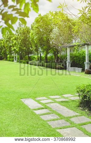 Green Grass Field In The Morning, Relaxation Scene.
