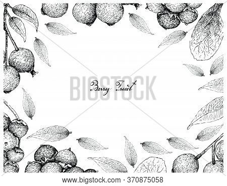 Berry Fruit, Illustration Frame Of Hand Drawn Sketch Of Jostaberries And Magenta Lilly Pilly, Magent