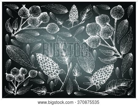 Berry Fruit, Illustration Wall-paper Of Hand Drawn Sketch Of Loganberries And Magenta Lilly Pilly, M