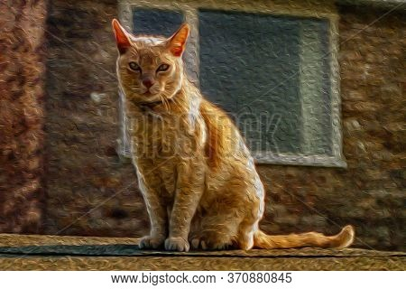 Close-up Of An Inquisitive Cat Under Summer Sunlight Over A Roof In Cambridge. A Beautiful And Peace
